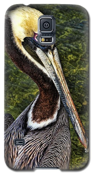Pelican Close Up Galaxy S5 Case by Paula Porterfield-Izzo