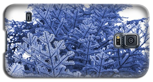 Galaxy S5 Case featuring the photograph Fir Trees After Summer Rain by Amanda Holmes Tzafrir