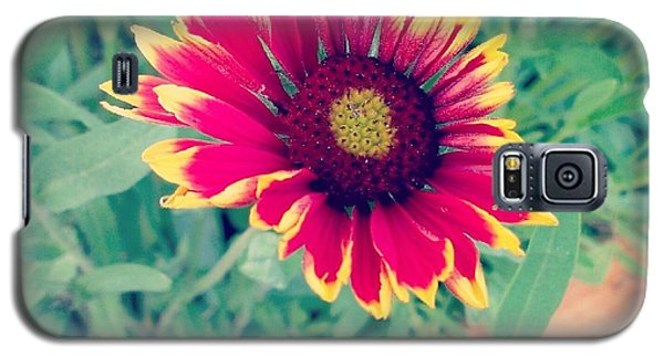 Galaxy S5 Case featuring the photograph Fire Daisy by Thomasina Durkay