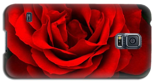 Galaxy S5 Case featuring the photograph Fire Red Rose by Margaret Newcomb