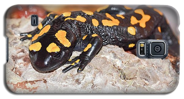 Fire Salamander (salamandra Salamandra) Galaxy S5 Case by Photostock-israel