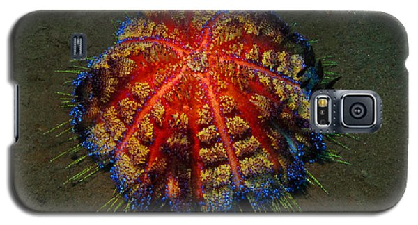 Galaxy S5 Case featuring the photograph Fire Sea Urchin by Sergey Lukashin