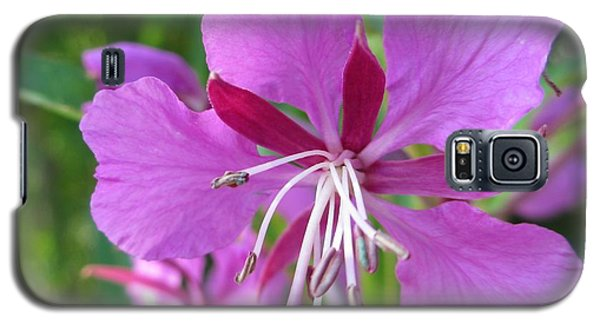Fireweed 1 Galaxy S5 Case by Martin Howard