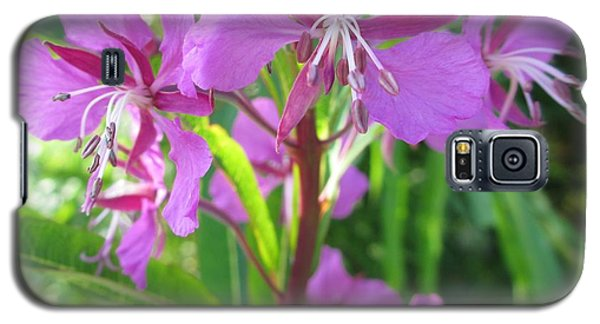 Fireweed 3 Galaxy S5 Case by Martin Howard
