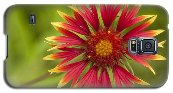 Firewheel Galaxy S5 Case