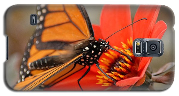 Galaxy S5 Case featuring the photograph First Monarch by Lena Wilhite
