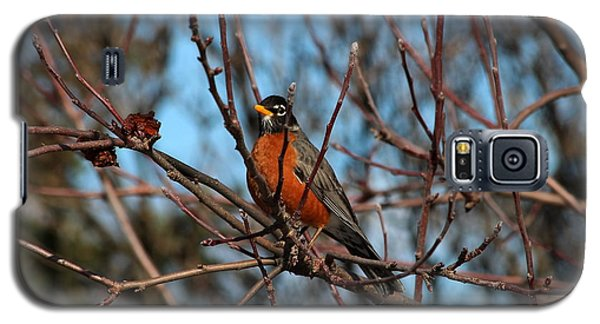 First Robin Of 2013 Galaxy S5 Case by Marjorie Imbeau