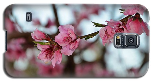 First Spring Blossoms Galaxy S5 Case