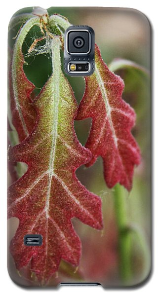 First Spring For The Oak Tree Galaxy S5 Case
