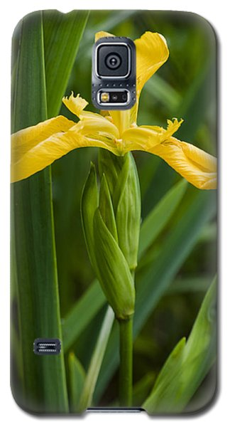 Galaxy S5 Case featuring the photograph Flag Iris by David Isaacson