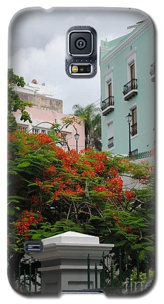 Flamboyan In Park Galaxy S5 Case