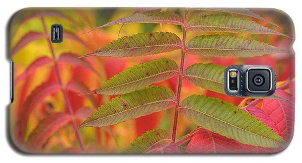Galaxy S5 Case featuring the photograph Flamboyant Sumac by Arkady Kunysz