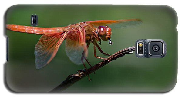 Flame Skimmer Dragonfly Galaxy S5 Case by Linda Villers