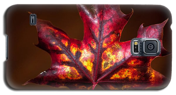 Flaming Red  Galaxy S5 Case by Crystal Hoeveler