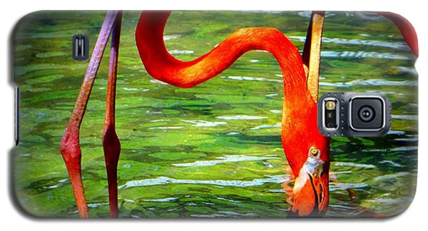 Galaxy S5 Case featuring the photograph Flamingo by David Mckinney