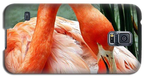 Flamingo Elegance Galaxy S5 Case