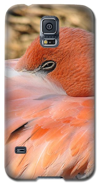 Galaxy S5 Case featuring the photograph Flamingo by Eva Kaufman