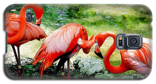 Flamingo Friends Galaxy S5 Case