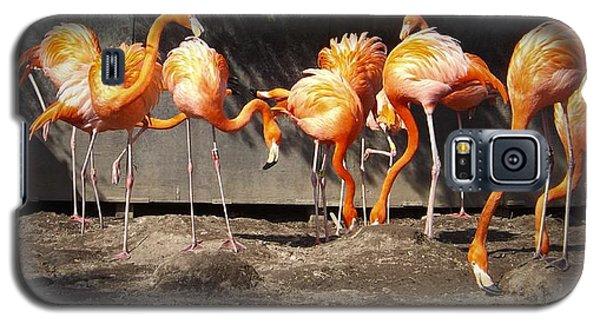 Flamingo Hangout Galaxy S5 Case by Sara  Raber