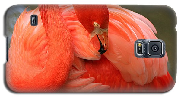 Galaxy S5 Case featuring the photograph Flamingo by Larry Nieland