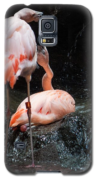 Galaxy S5 Case featuring the photograph Flamingo Love by Mike Lee