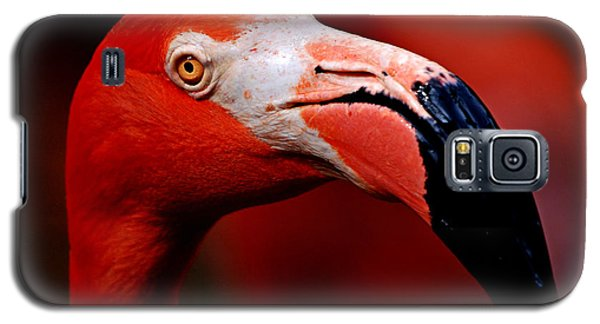 Galaxy S5 Case featuring the photograph Flamingo Portrait by Lorenzo Cassina