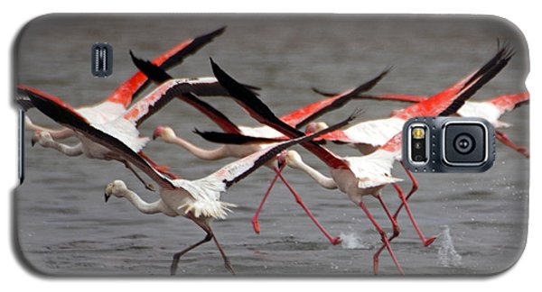 Galaxy S5 Case featuring the photograph Flamingoes In Flight by Dennis Cox WorldViews