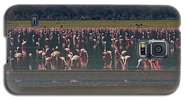 Galaxy S5 Case featuring the photograph Flamingos  - 16x66 by J L Woody Wooden