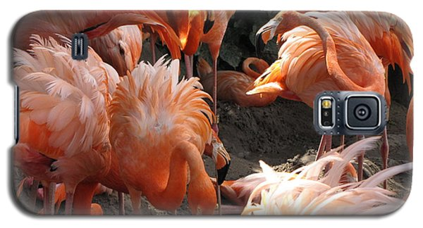 Galaxy S5 Case featuring the photograph Flamingos by Beth Vincent