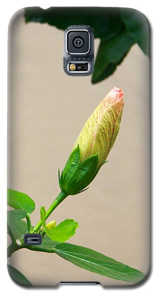 Flare 23 Galaxy S5 Case