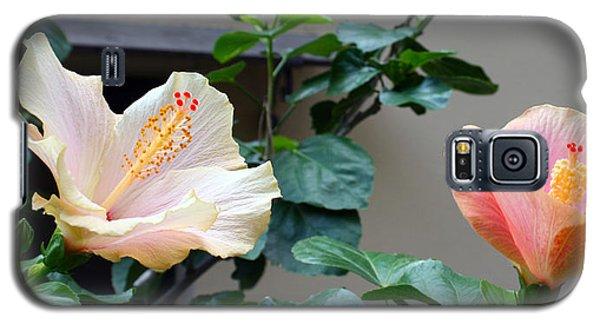 Flare 24 Galaxy S5 Case