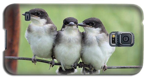 Fledged Siblings Galaxy S5 Case by Bonfire Photography