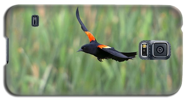 Blackbird Galaxy S5 Case - Flight Of The Blackbird by Mike  Dawson
