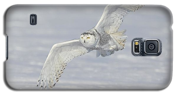 Galaxy S5 Case featuring the photograph Flight Of The Snowy by Daniel Behm