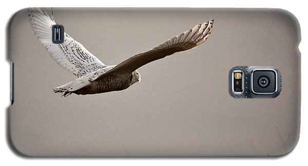 Galaxy S5 Case featuring the photograph Flight Of The Snowy Owl by Erin Kohlenberg