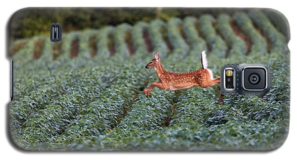 Flight Of The White-tailed Deer Galaxy S5 Case by Everet Regal