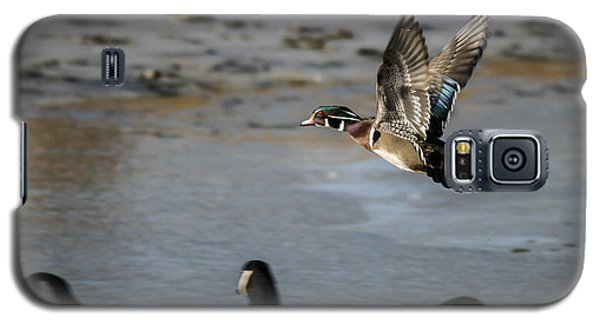 Flight Of The Wood Duck Galaxy S5 Case