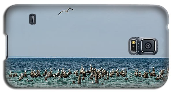 Flock Of Seagulls Galaxy S5 Case by Sebastian Musial