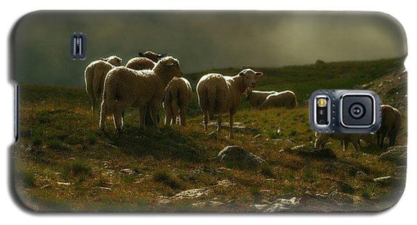 Flock Of Sheep Galaxy S5 Case