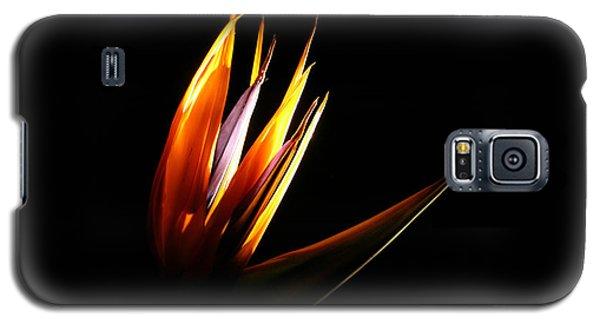 Flor Encendida Detalle Galaxy S5 Case