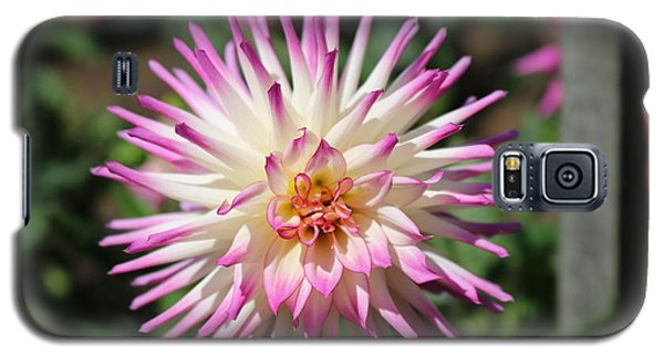 Galaxy S5 Case featuring the photograph Floral Beauty 3  by Christy Pooschke