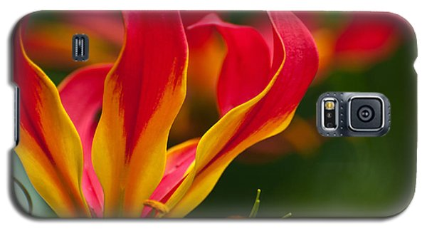 Galaxy S5 Case featuring the photograph Floral Flames by Sabine Edrissi