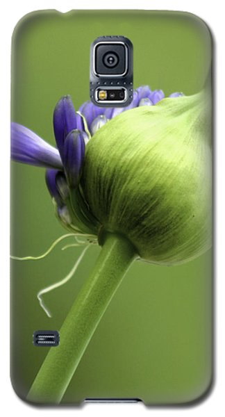 Floret Cluster Emerging  - The Agapanthus Series Galaxy S5 Case