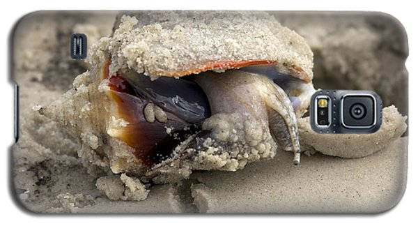 Galaxy S5 Case featuring the photograph Florida Fighting Conch by Meg Rousher