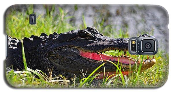 Gator Grin Galaxy S5 Case