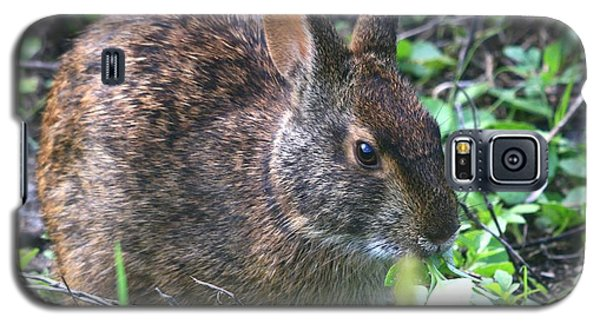 Florida Marsh Rabbit Galaxy S5 Case