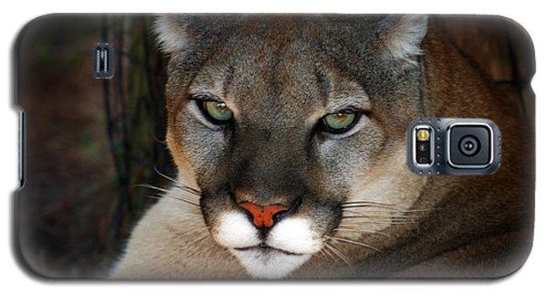 Florida Panther Galaxy S5 Case