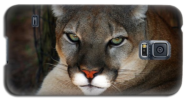 Florida Panther Galaxy S5 Case