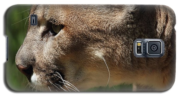 Galaxy S5 Case featuring the photograph Florida Panther Profile by Meg Rousher