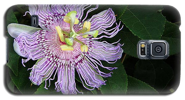 Florida Passion Flower Galaxy S5 Case